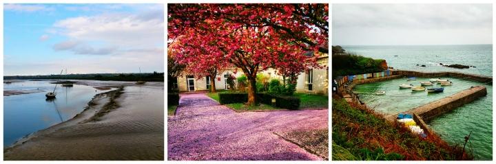 Regnéville-sur-Mer (50), Cerisiers en fleurs, Port Racine (50)